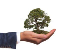 prawo ochrony środowiska adwokat, kancelaria